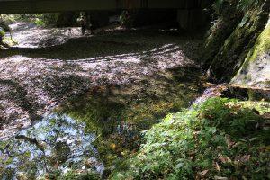 亀ケ淵 清水